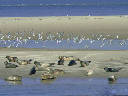 Hotel-Pension Zoomoord, Renesse - Photo seals